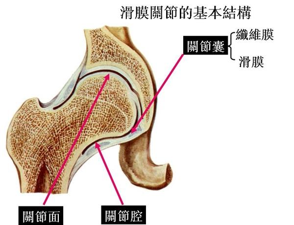 00_滑膜關節的基本結構.JPG