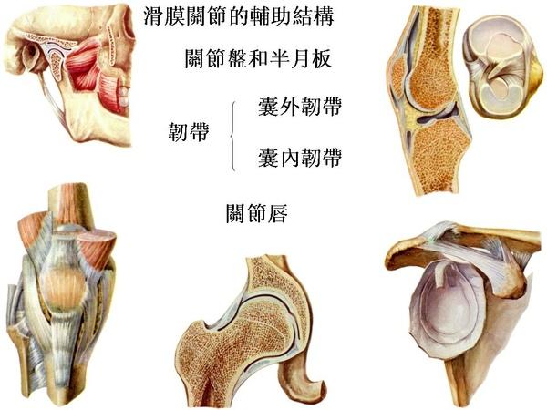 00_滑膜關節的輔助結構.JPG