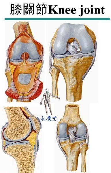 膝關節1.JPG
