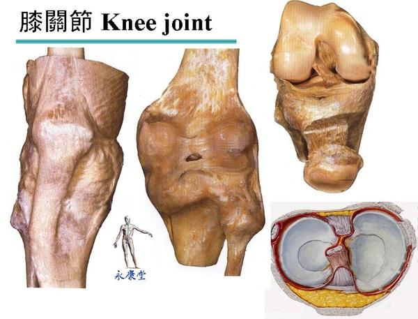 膝關節.JPG