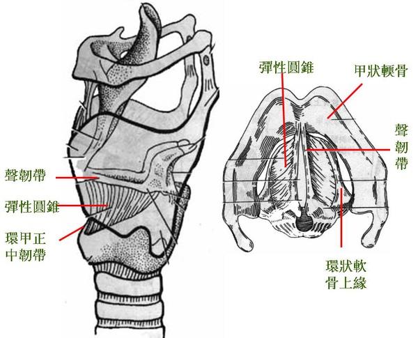 09_喉_喉的連結.JPG