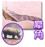 《中草藥學》03犀角:cmed-20000303g01