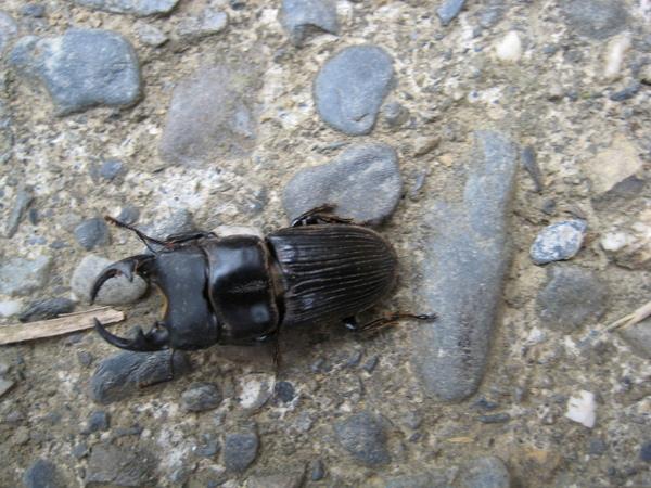 鞦型蟲(杉林溪)