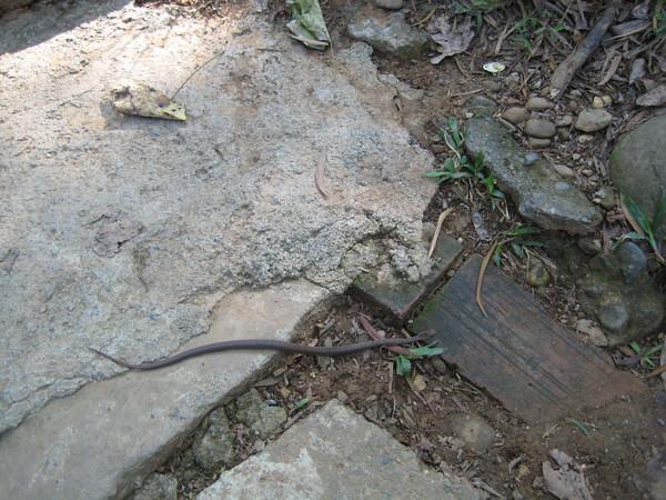 1201田中森林公園小蛇