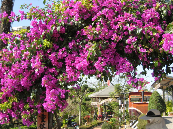 花團錦簇(1229東豐紀念公園)