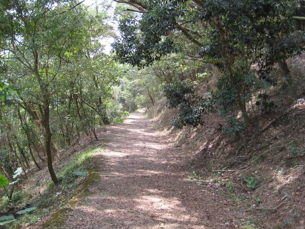 0316樟樹林步道