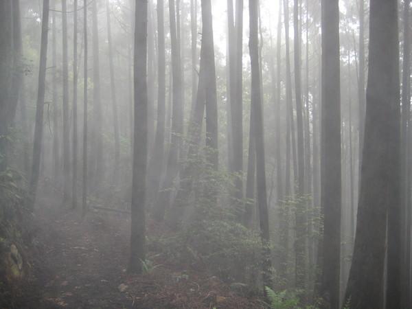 橫嶺山步道朦朧之美(0503)