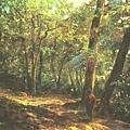 奚淞畫作--釋迦下山 (1999年)