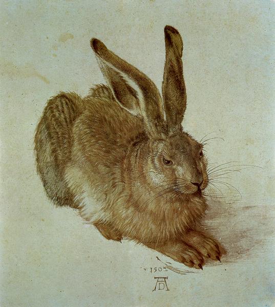 野兔﹝A Young Hare﹞