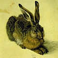 durer - A Young Hare 1502