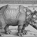 durer-rhinoceros 1515