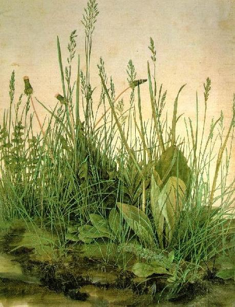 Durer - The Large Turf 1503