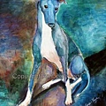 greyhound_bluesymphony.jpg