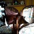 小毛姆O.S:呃..好像坐錯椅子了...隔壁的太陽比較多...