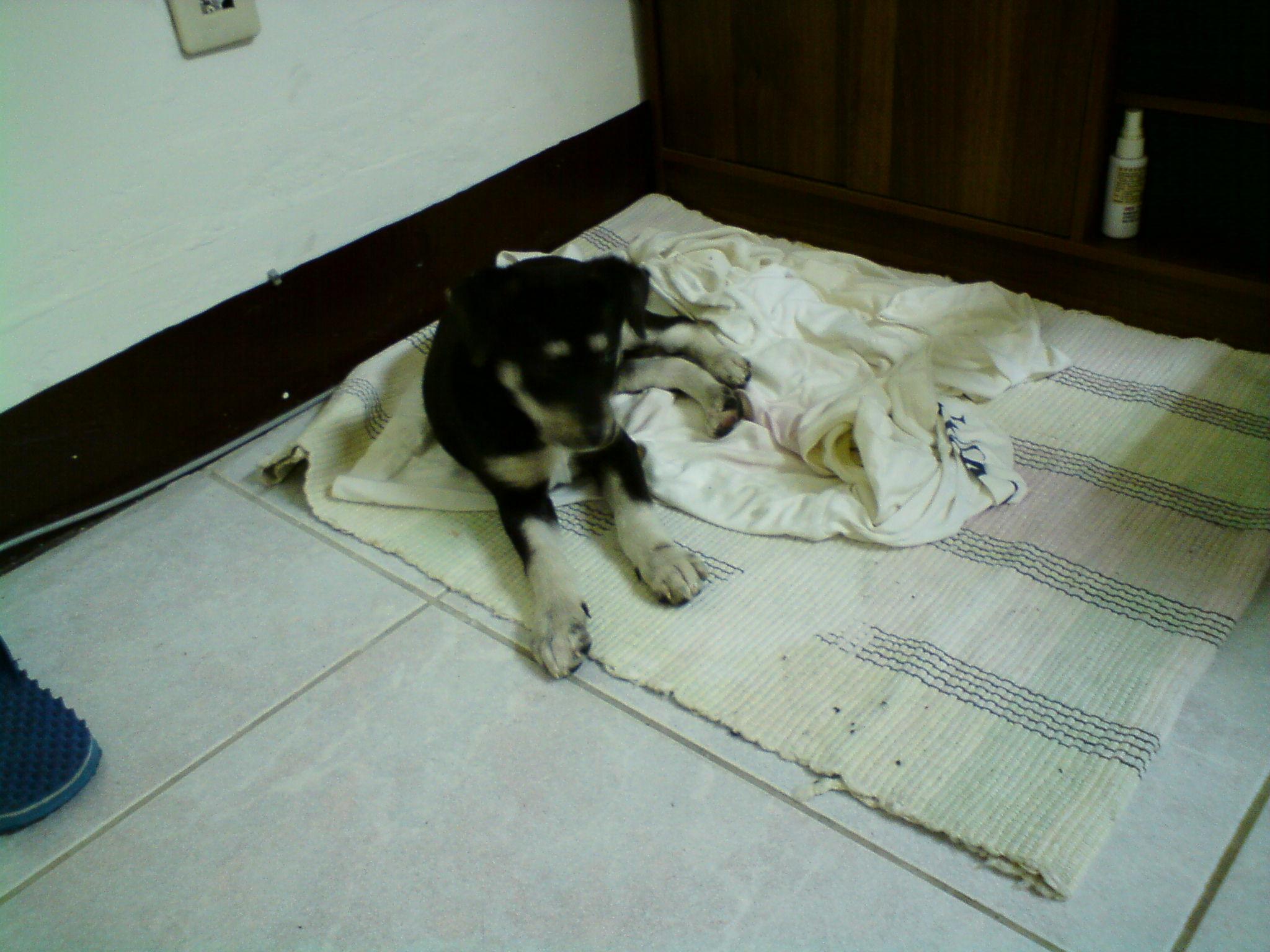 小秋已經選擇好睡覺的地方了 (991201 )