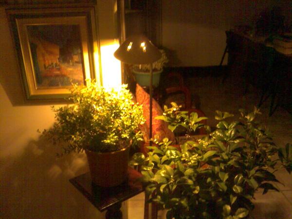 玄關處的盆栽
