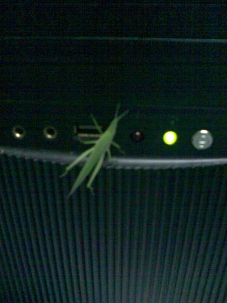啊,原來是一隻喜歡電腦的蚱蜢啊!!(980811 清晨6:00)