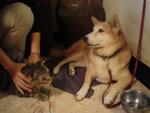 主人:Luby,這是新來的喵喵,你聽好,以後要好好照顧牠,不准欺負牠喔!!