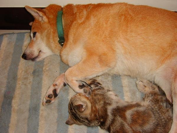 貓咪:老大,快起來,好像有人來了...