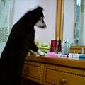 剛洗完澡的小毛姆,第一次照鏡子