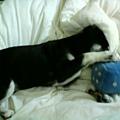 小毛姆的窩與牠的球球