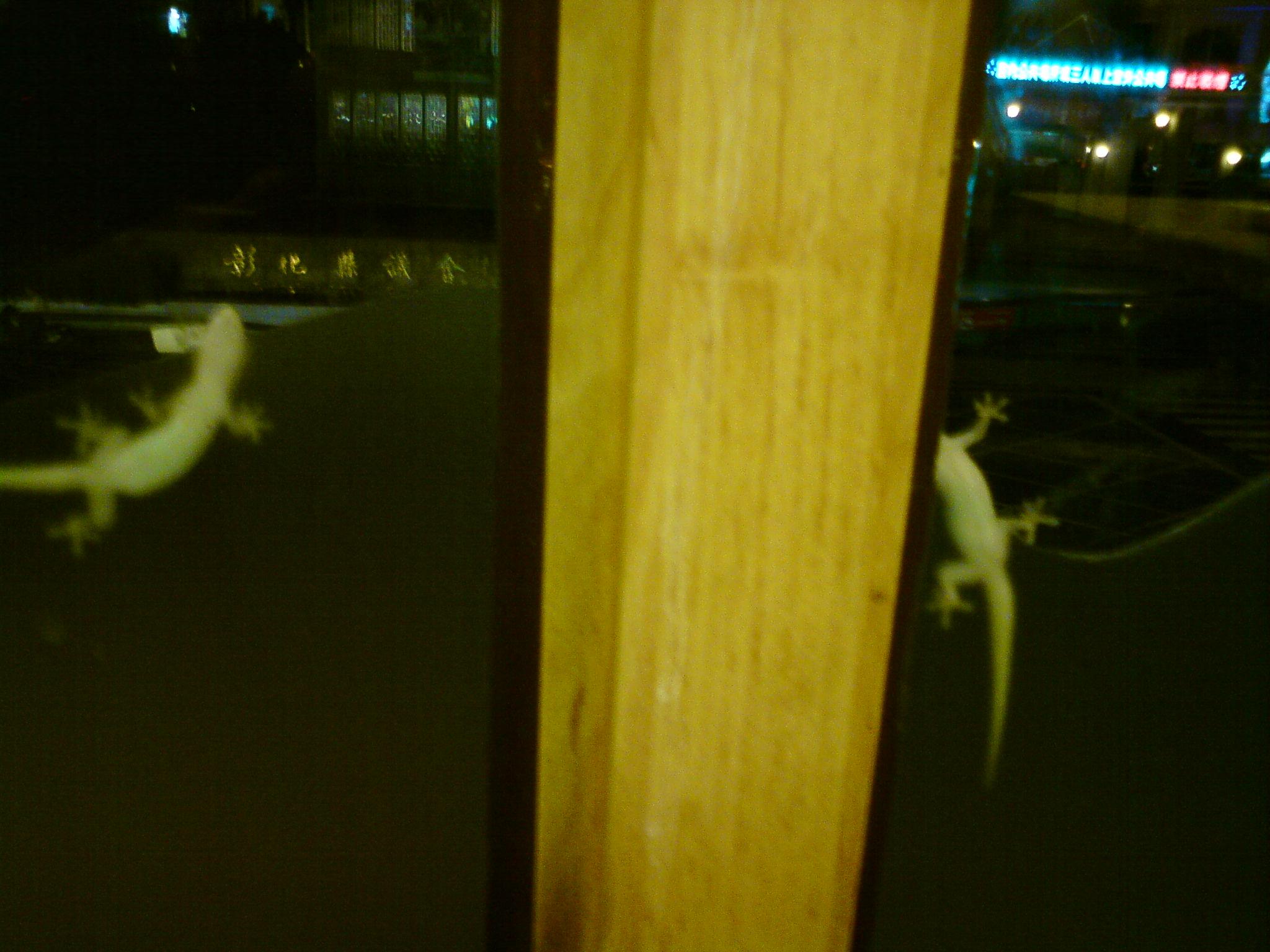 二階窗外的二隻壁虎