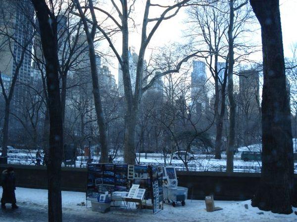中央公園.jpg