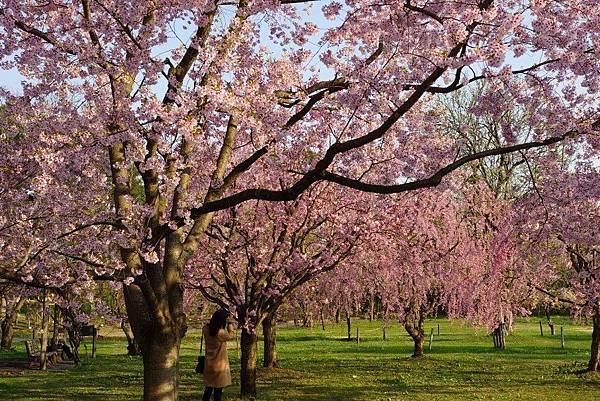 【日本】2018日本東北追櫻計畫與行程分享 12天從北海道玩到京都自助六萬內搞定