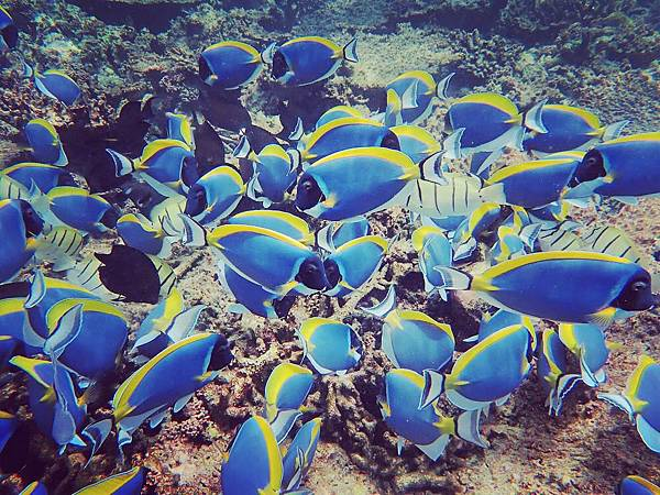 【馬爾地夫】居民島馬富施 Mafushi Scuba Tour 跳島一日