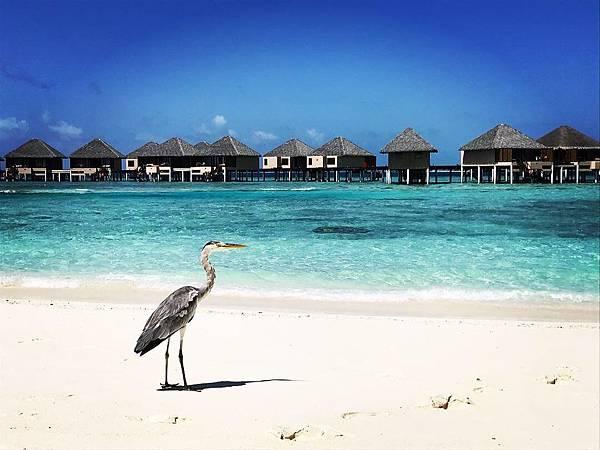 【馬爾地夫】夢幻飯店島VADOO登島一日遊 水上屋美景 自助午餐