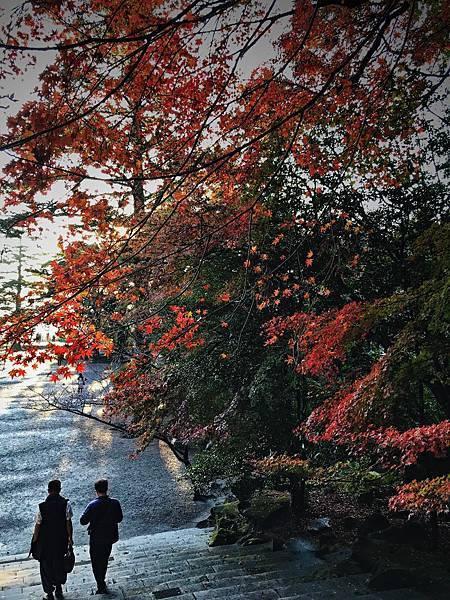 【日本九州】南九州最大神宮 楓紅的霧島神宮