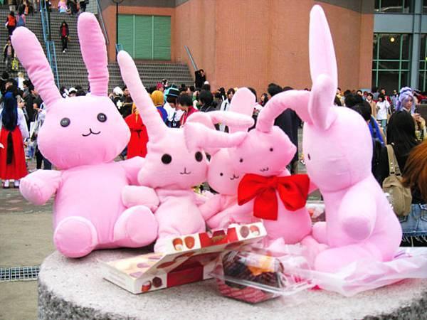 櫻蘭高校的兔子啊啊