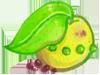 菊草葉果實