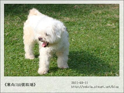 2011031101.jpg