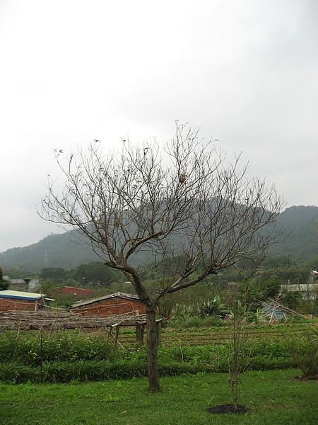 桃花與遠山