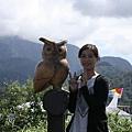 拉魯島上的貓頭鷹