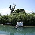 拉魯島上的水鹿(雕像)