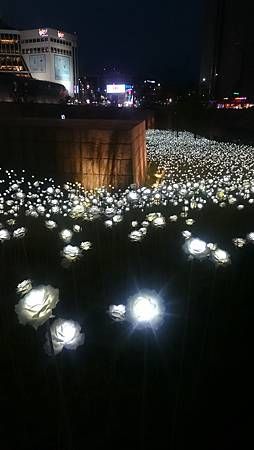 東大門LED玫瑰花海