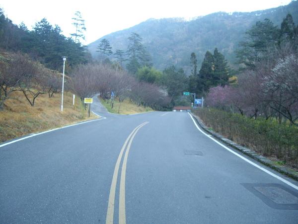 早上七點的道路怎麼這麼可愛