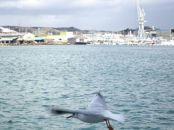 回家前去看海鷗
