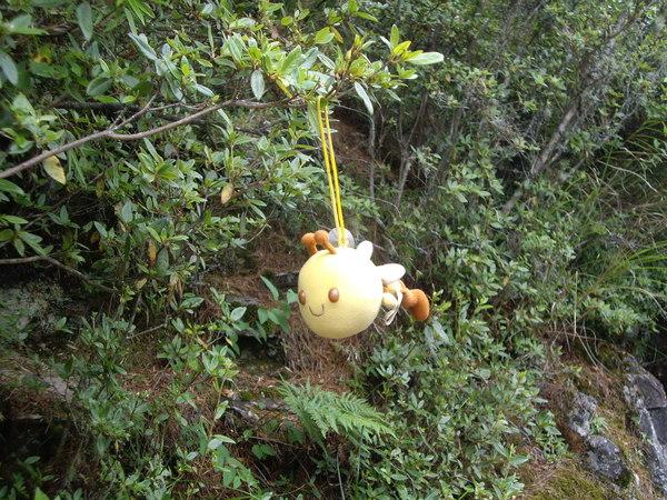 半路樹上的小蜜蜂.JPG