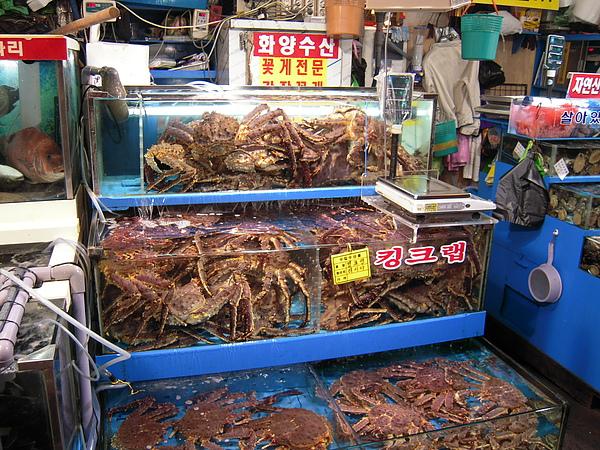 螃蟹多得快擠爆水缸