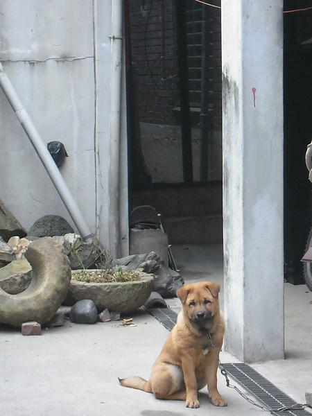 三清洞的狗狗也很有fu