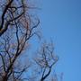 梨大的天空