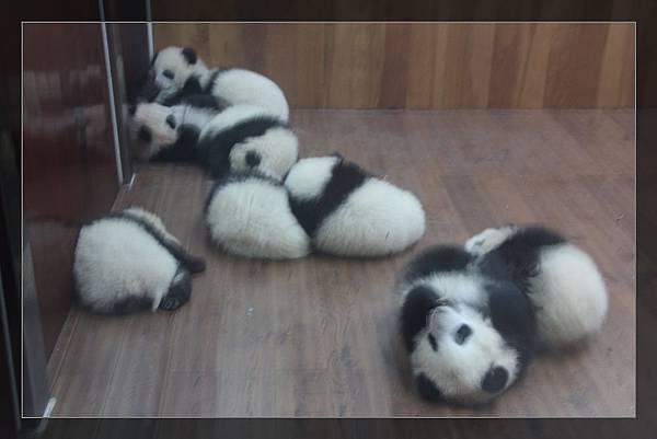 panda 1.jpg