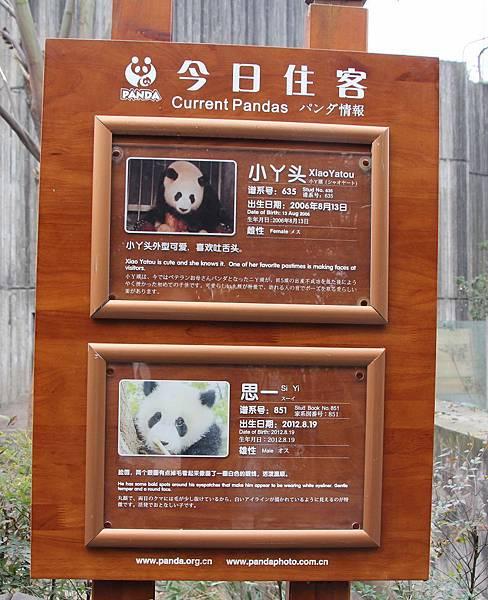 panda 3.jpg