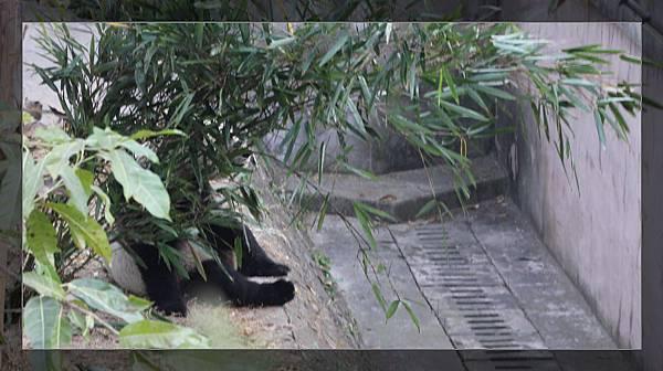 panda 6.jpg