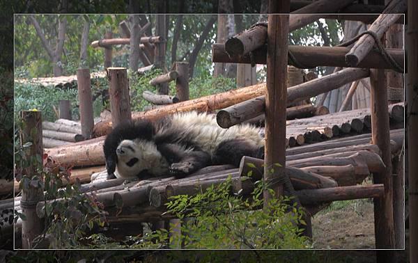 panda 8.jpg