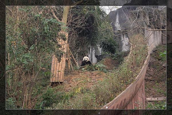 panda 92.jpg