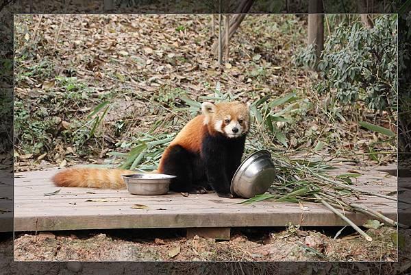 panda 96.jpg